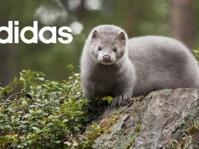 """Adidas каза  не"""" на кожите с косъм"""