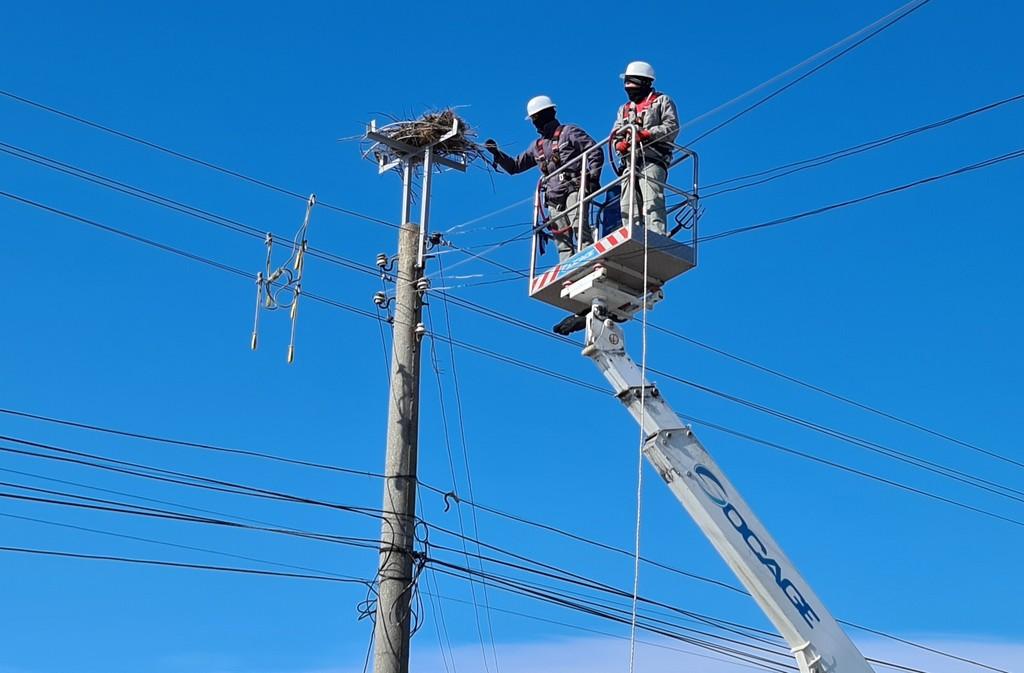 """174 нови платформи за щъркелови гнезда по стълбовете монтира през 2020 г.  Електроразпределение Юг"""""""