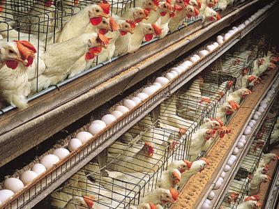 Великден без клетки: Демонстрация разкрива ужаса на яйцата от клетъчно отглеждане