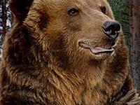 PETA призовава министъра на земеделието, храните и горите да оттегли разрешението за отстрел на мечката край Белица
