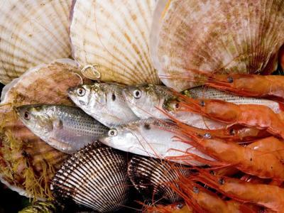 WWF: Незаконният риболов излага на риск океанските ресурси